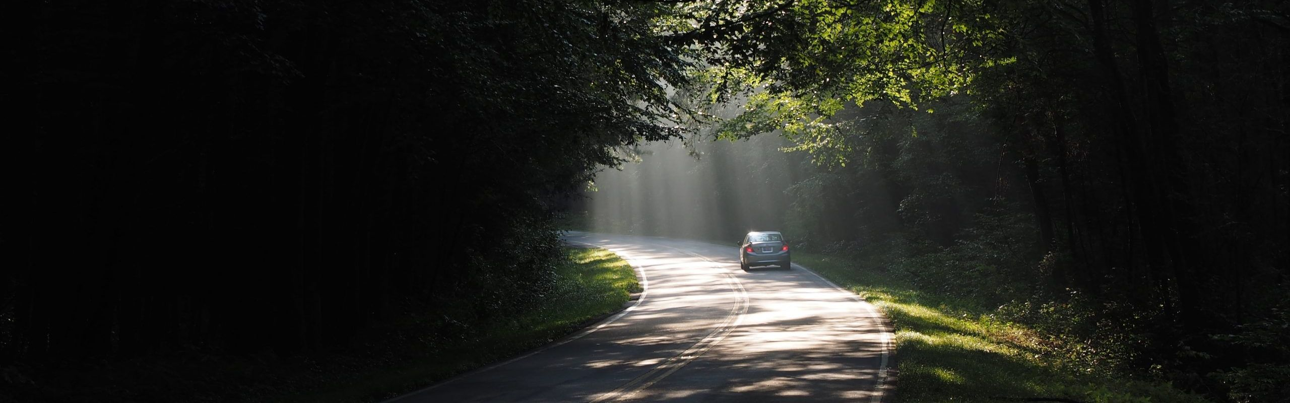 car-driving-through-road-forest-h800